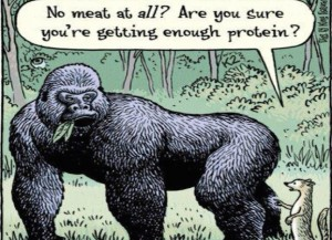 Gorilla-Protein