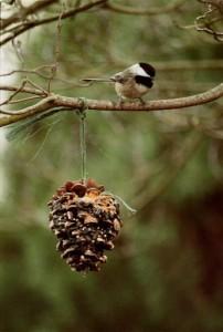 pineconebirdfeeder