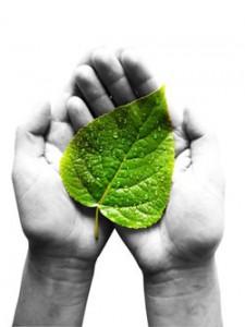 hands-leaf
